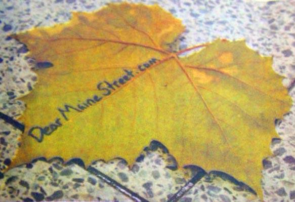 Dearmainestreet Leaf