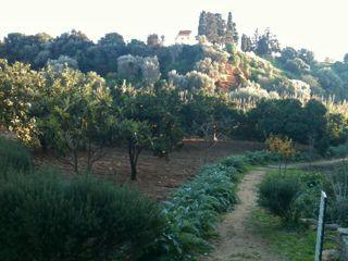 10agrigento Kolymbetra Garden 3 ill
