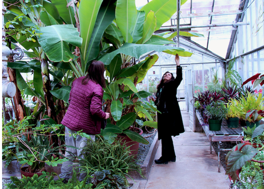 Joline Blais and Stephanie Burnett in the Roger Clapp Greenhouse, 2019